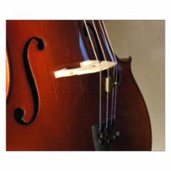 Wolf Tone Eliminators, Southwest Strings